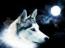 Lobo a la luz de la luna