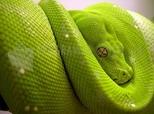 Imagen de Serpiente
