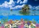 Télécharger Coral Island Screensaver 5.07