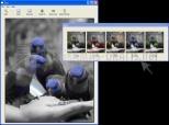Tint Photo Editor 2.1.0