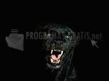 Pantera Nocturna