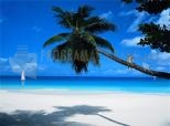 Tropic Paradise 5.07