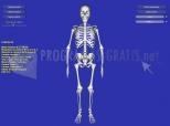 Imagen de Esqueleto 3D