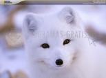 Polar Animals Screensaver 1.0