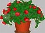 Imagen de Desktop Plant