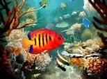 Imagen principal de Tropical Fish 3D Screensaver