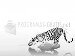 Imagen de Tiger