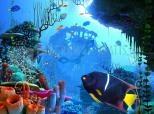 Coral Clock 3D Screensaver 1.0
