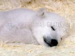 Polar bearcub