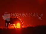 Download Pferd im Sonnenuntergang