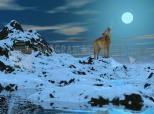 Imagen de Lupo polare