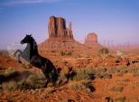 Cavalo no Monument Valley
