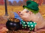 Lustiges Schweinchen