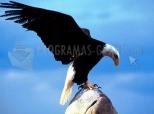 Imagen de Eagle