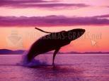 Balena al capvespre