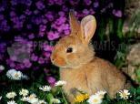 Imagen de Rabbit
