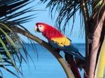 Papagaio no paraíso