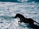 Cavalo sobre as Ondas