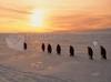 Download a viagem dos pinguins