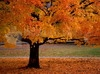 Download beleza de outono