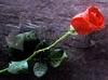 Download amor verdadero por siempre