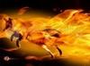 TÉLÉCHARGER fire fox
