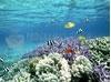 SCARICARE tropical fish wallpaper