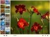 Download anvsoft flash slide show