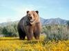 SCARICARE il grande orso