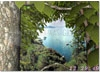 DOWNLOAD forest life 3d screensaver