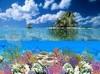 DOWNLOAD coral island screensaver
