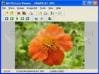Download ad picture viewer