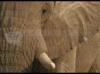 Download elephant screen saver