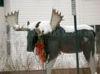 DOWNLOAD moose screen saver