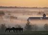 Download foggy horse farm
