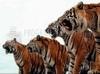 Download tigres bravos