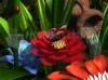 Download garden flowers 3d screensaver
