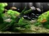 Download dream aquarium xp screensaver