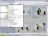 Download flv importer pro for adobe premiere pro