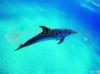 DOWNLOAD free dolphin picture screensaver