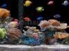 SCARICARE acquario tropicale