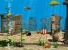 DOWNLOAD funny fish 3d