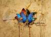 Download beauty butterflies