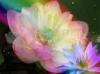 Download flor de loto
