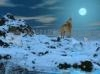Download lobo polar