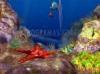DOWNLOAD under the sea 3d screensaver