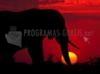 Download elefante ao anoitecer