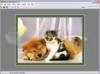 DOWNLOAD photo frames master