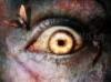 SCARICARE occhio e insetti