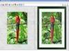 Download fotosketcher portable